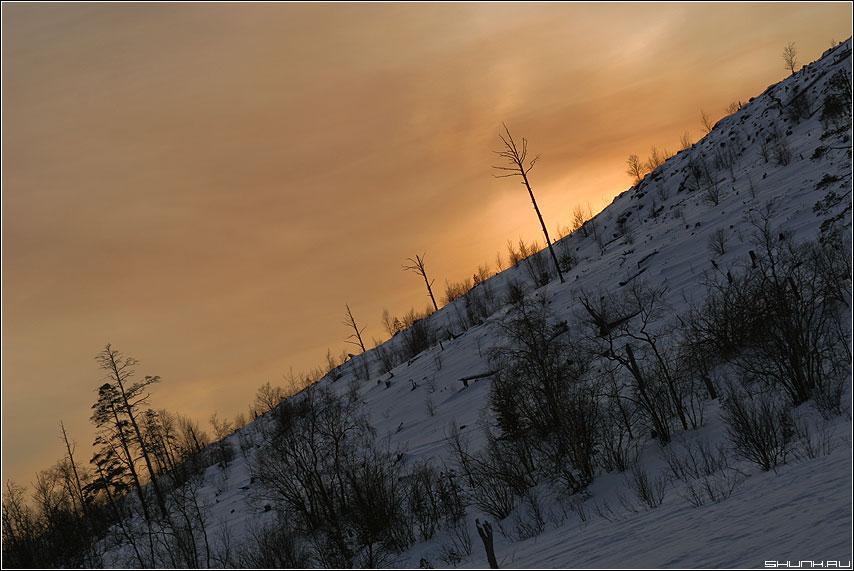 За бугром Норвегия - гора собачка небо деревья никель норвегия заполярье фото фотосайт
