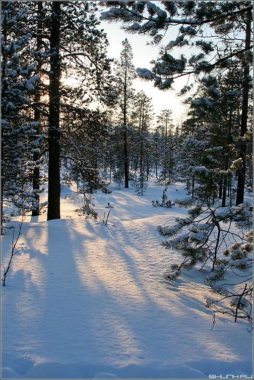 В норвежских лесах - зима лес русские просторы россия фото фотосайт