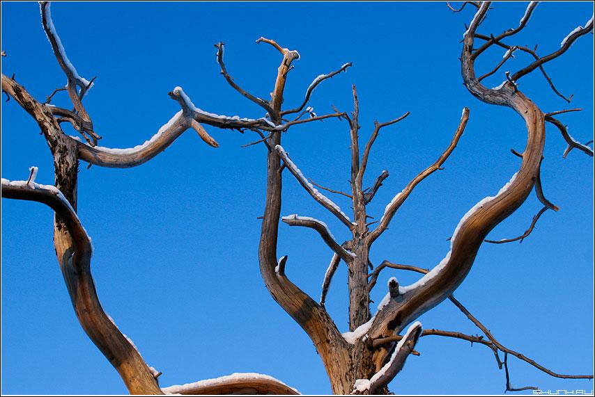 Такие вот деревья - дерево ветви небо никель фото фотосайт