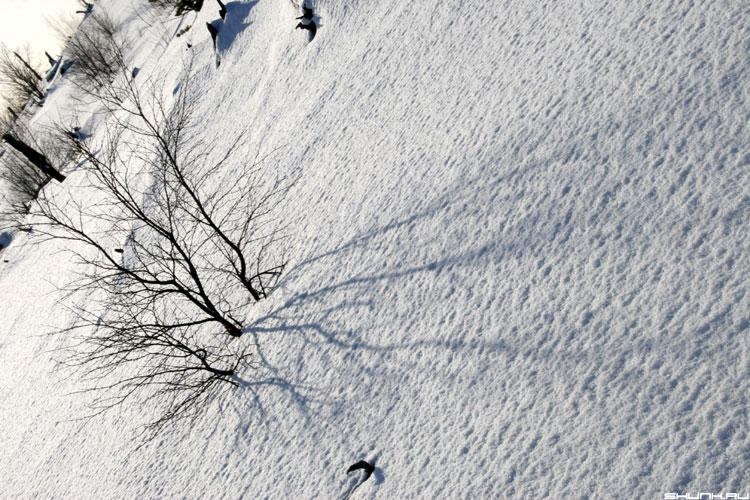 Ветвь судьбы - кустик тени фото фотосайт