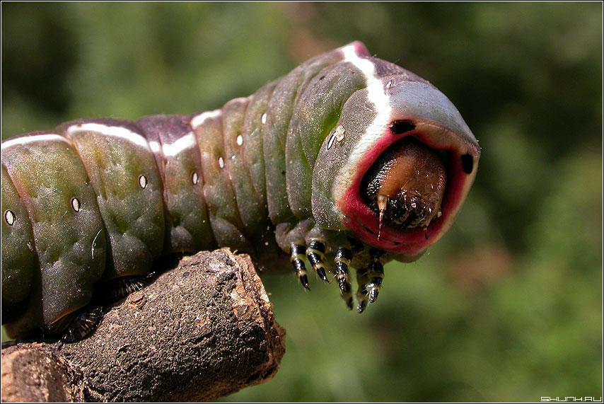 Гусеница - гусеница складка макро живое фото фотосайт