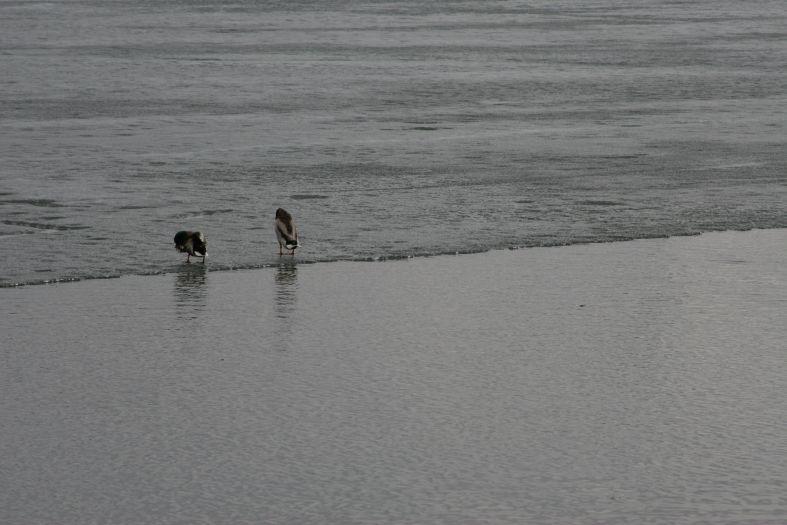 На краю - утки лед весна пруд фото фотосайт