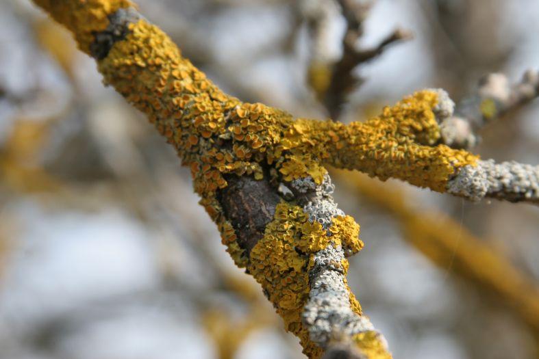 Авитаминоз - весна яблоня лишай фото фотосайт