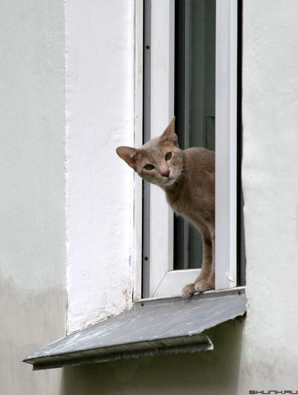 Кошка в Окошке - кот окно приоткрыто фото фотосайт
