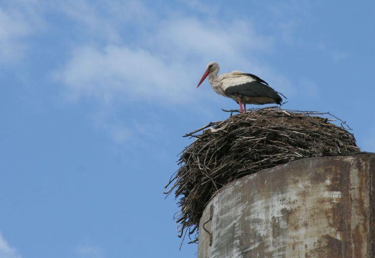 Аист (на крыше) - гнездо водонапорная башня фото фотосайт