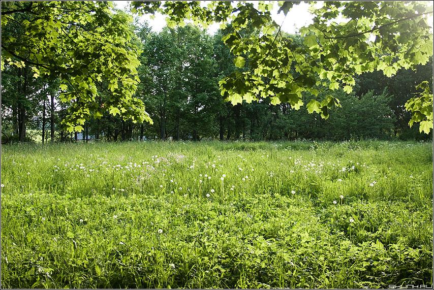 Солнечный денек - лужайка клены солнце лето фото фотосайт