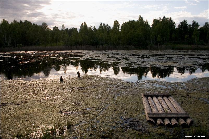 Местечко - болото лето природа фото фотосайт