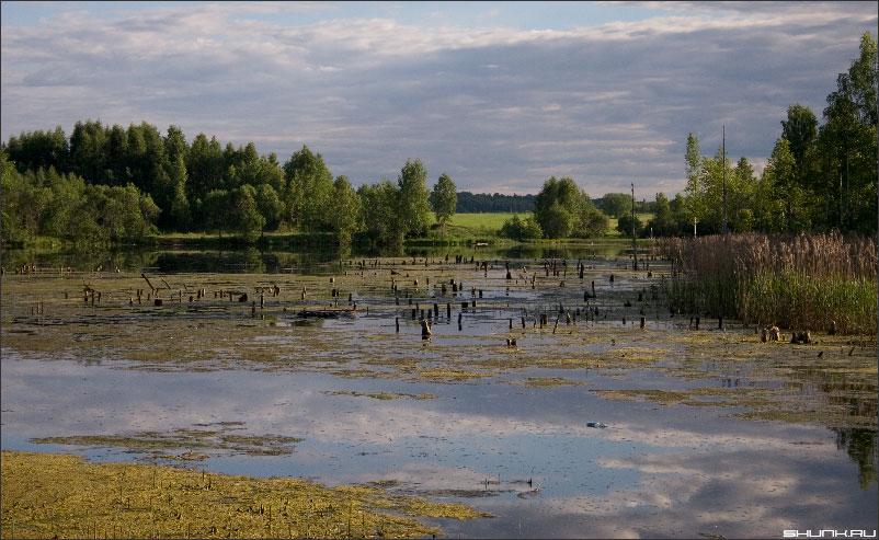 Пеньки - на болоте фото фотосайт