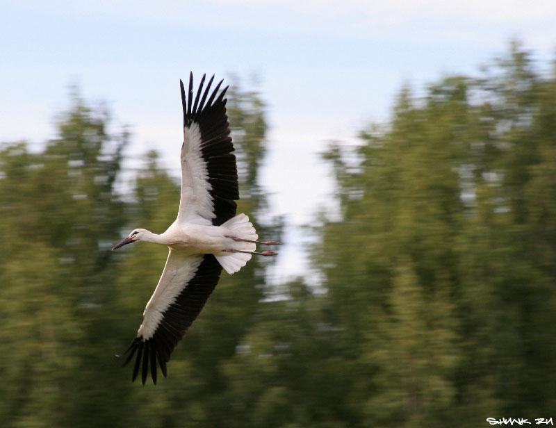 Вольная птица - аист в поле фото фотосайт