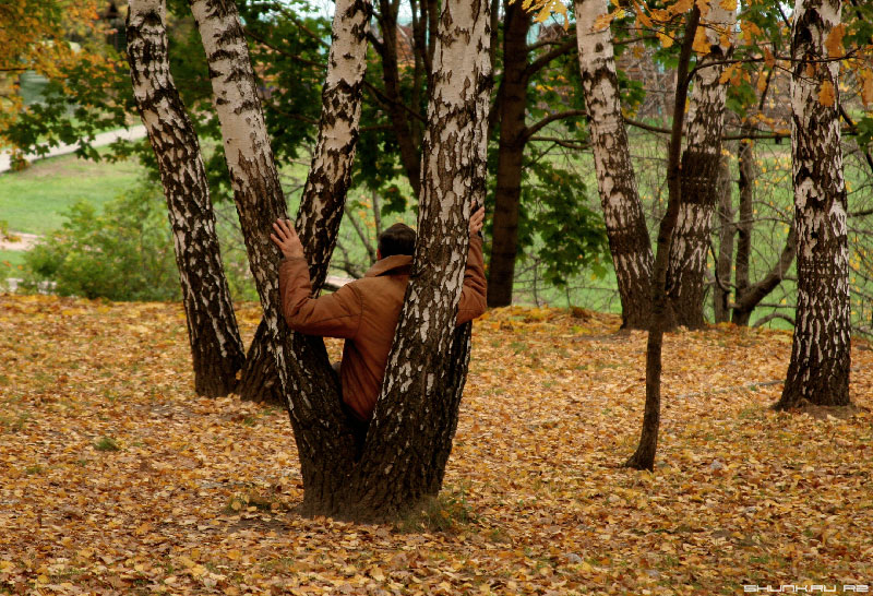 Шаман осени - береза листва человек единение природа фото фотосайт