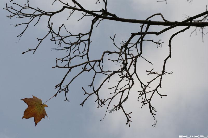 Последний - осень небо лист клен фото фотосайт
