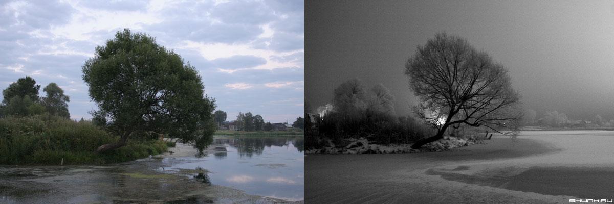 Зима и лето. День и ночь. - два дерево чернобелое цвет деревня фото фотосайт