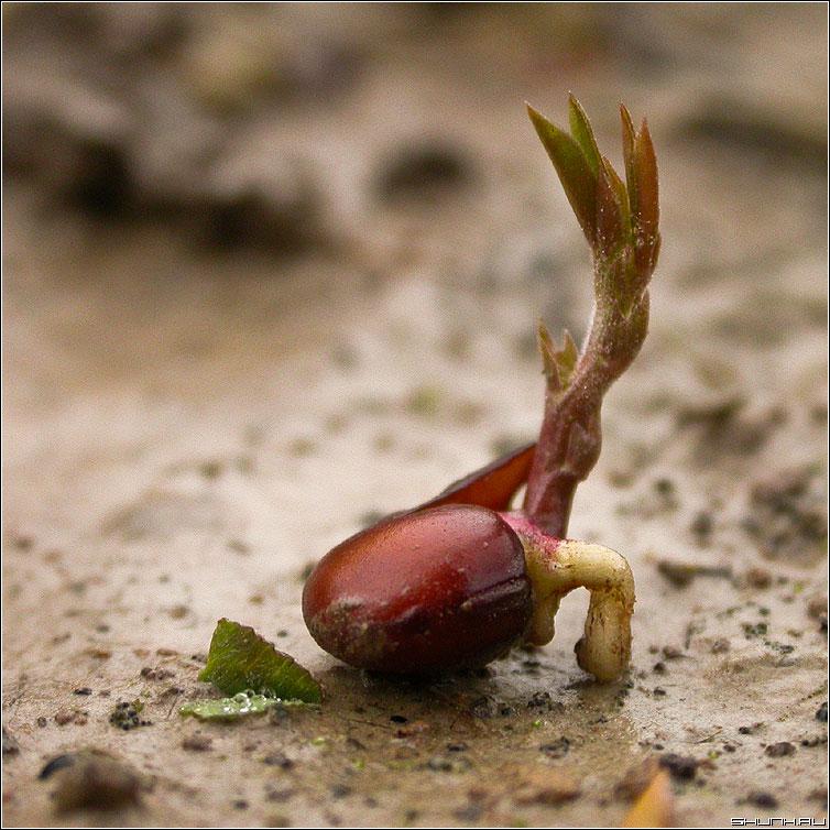 Желание жить - росток семя семечко земля фото фотосайт