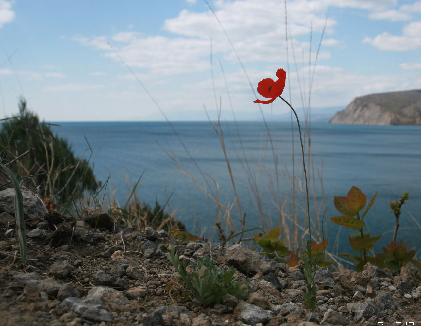 Мак в Новом Свете - небо море горы крым фото фотосайт