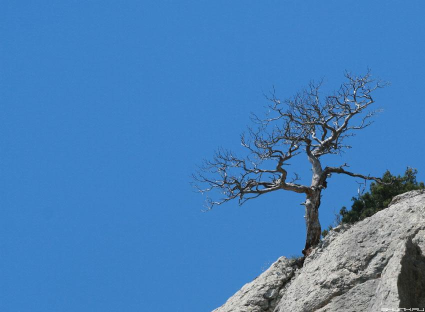 На вершине была жизнь - крым горы дерево сухое фото фотосайт