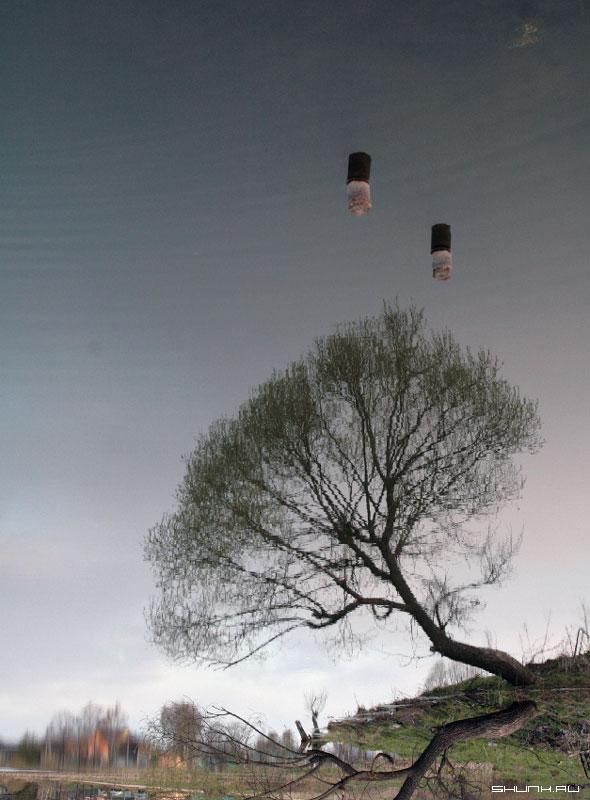 Любимое дерево - отражение деревня шустиково фото фотосайт