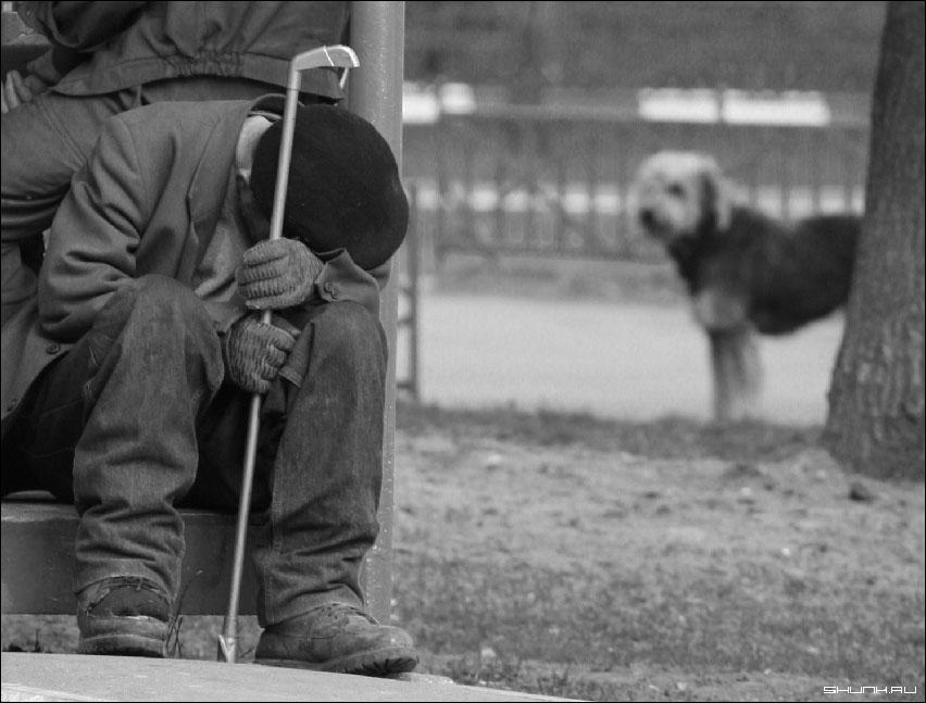 Друг - бомж пес собака фото фотосайт