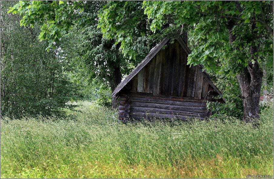 Край ты мой любимый - сарай поле деревья фото фотосайт