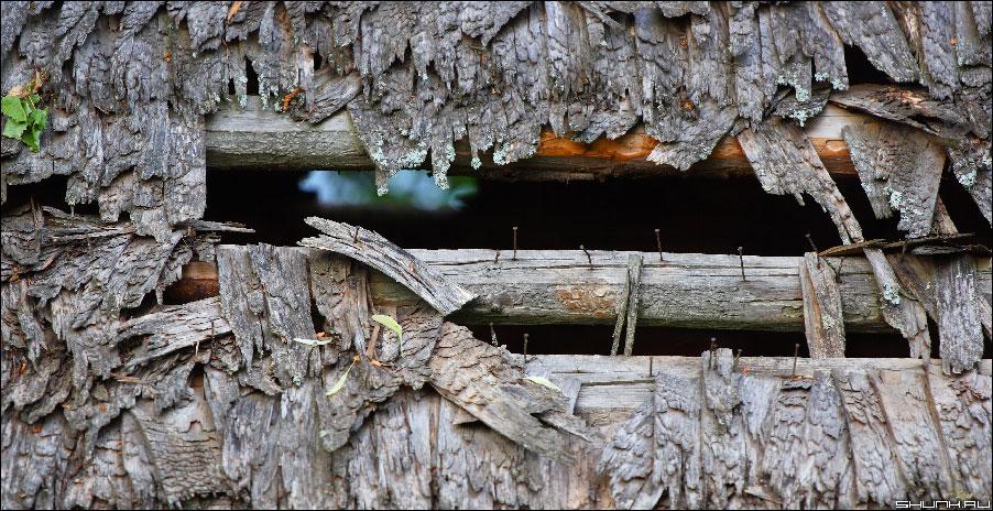 Прохудилась крыша - дранка гвоздики фото фотосайт