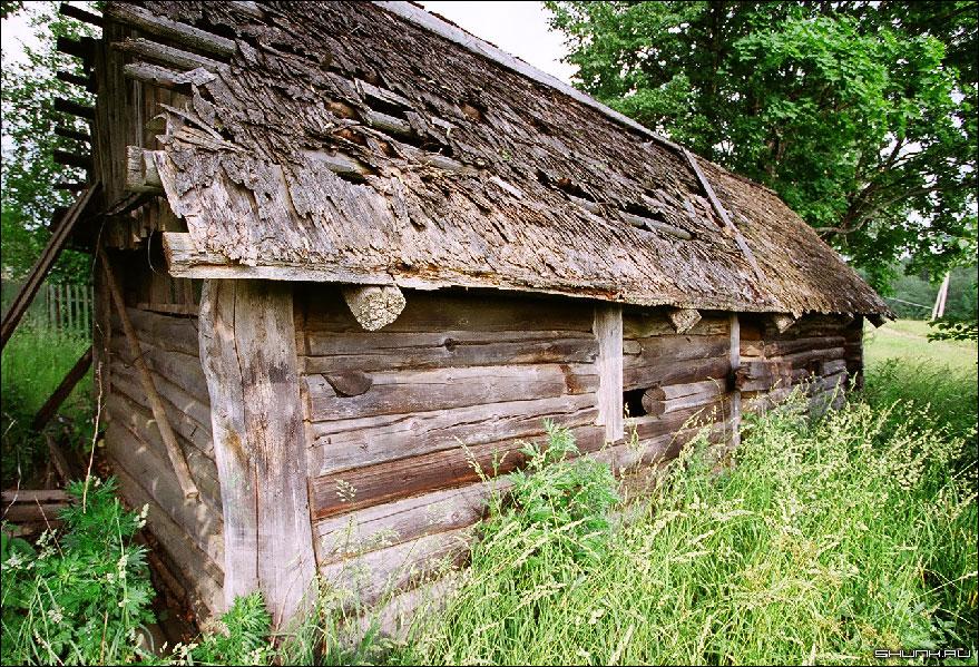 Этот старый сарай - лето деревня Рубцово Московской области фото фотосайт