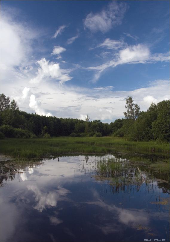 Игры дьявола на небесах - болото небо облака лес фото фотосайт