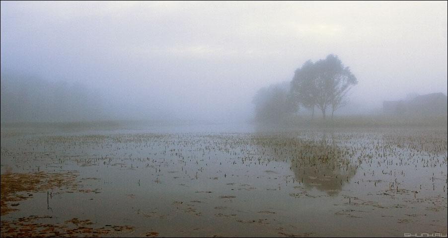 Слишком я любил на этом свете, то.... - туман лето начало июля фото фотосайт