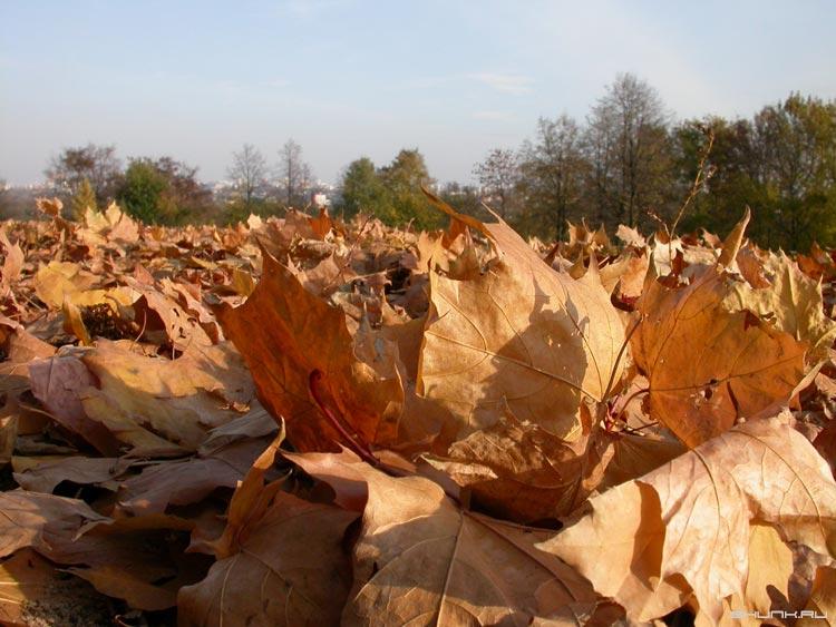 Листва под ногами - листья осень близко фото фотосайт