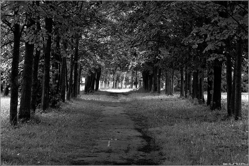 Кленовая аллея - чёрнобелое фото аллея деревья тропинка таложня фото фотосайт