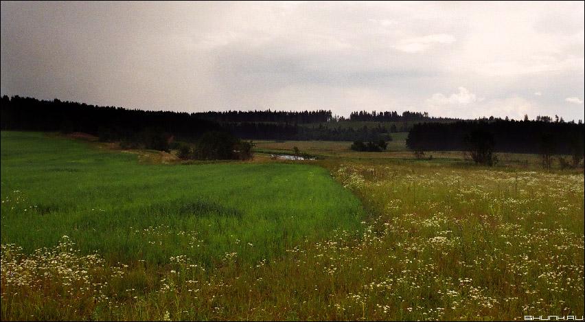 Поле. Русское поле. - пленка eos 30v сканированная фотография лето поле фото фотосайт