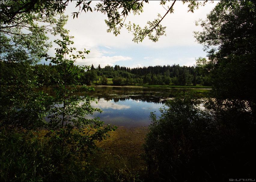 Окно в природу - пленка eos 30v сканированная фотография лето болото фото фотосайт