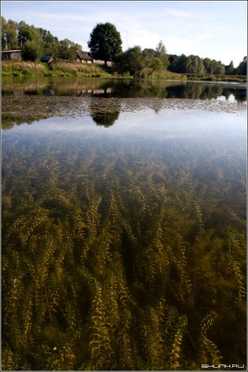 Вводуросли - водоросли лето пруд деревня фото фотосайт
