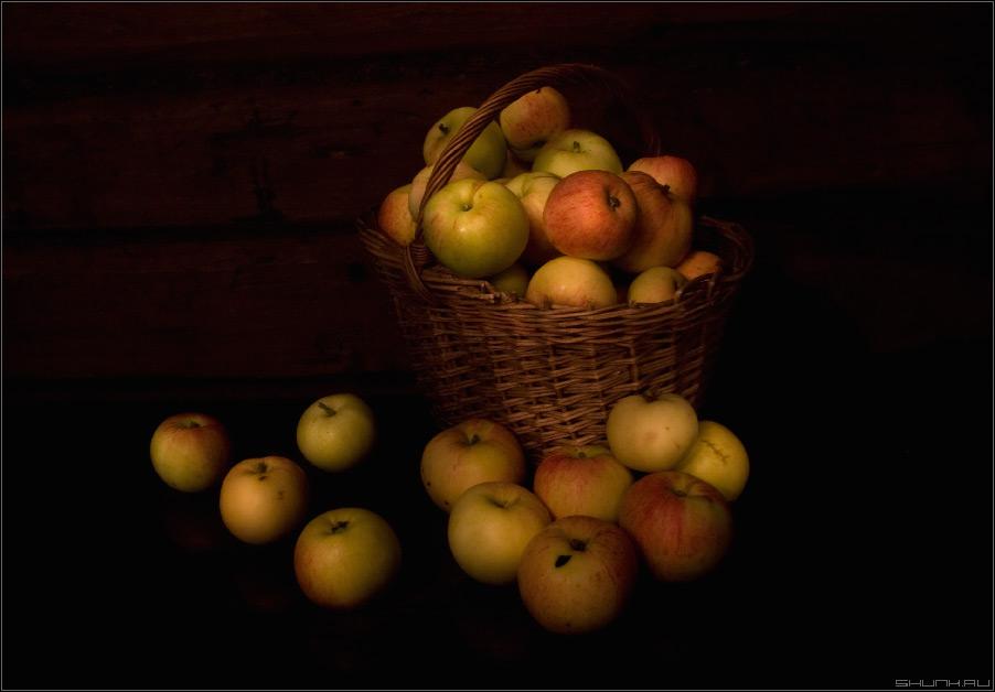 Яблочный спас - натюрморт яблоки много корзина фото фотосайт