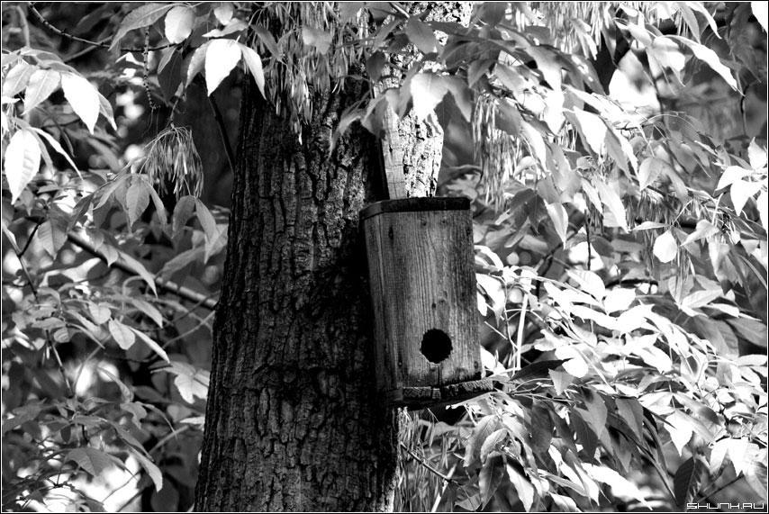 Что за глупый скворец... - скворешник дерево чб фото фотосайт