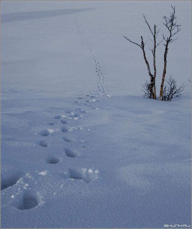 Дорога в гору - окрестности никеля фото фотосайт