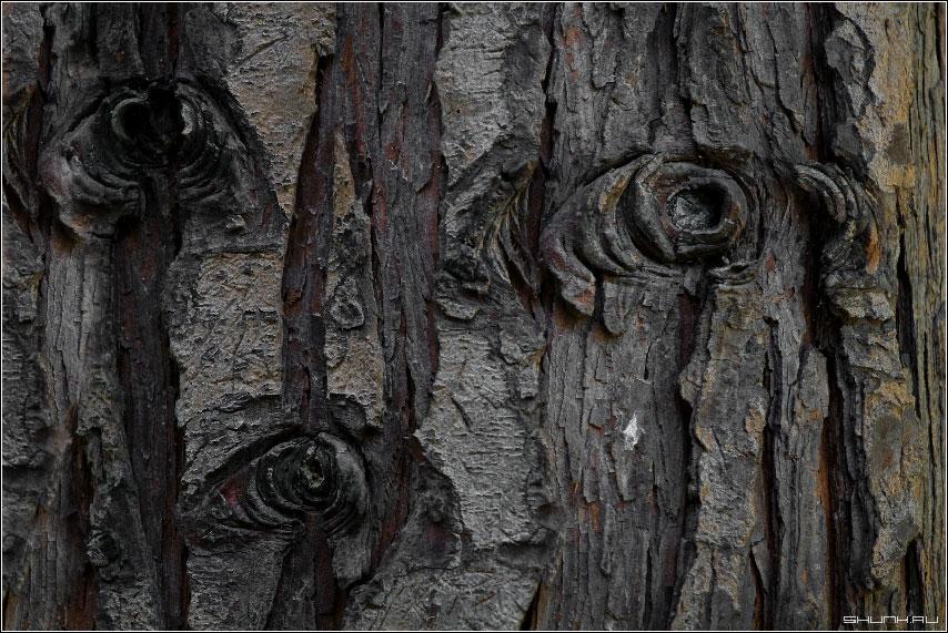 Многоглазовое дерево - дерево глаза кора обои фото фотосайт