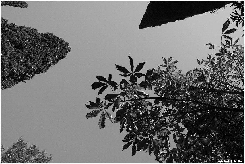 Геометрия южного неба - сочи растения чб небо фото фотосайт