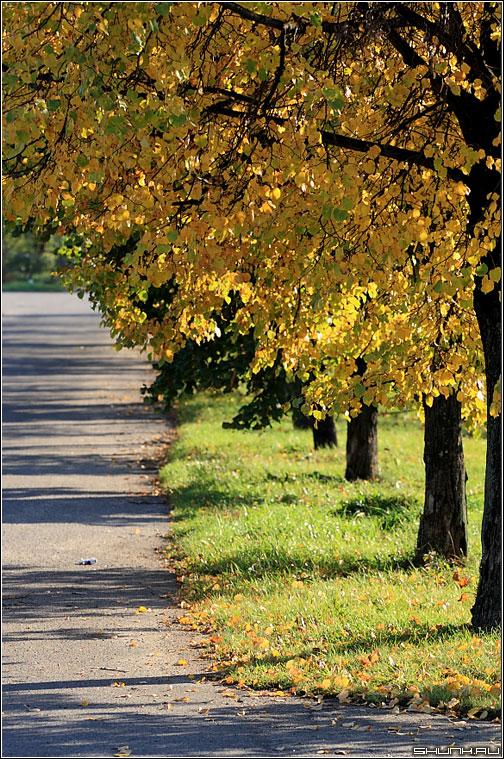 Тени осени - парк осень желтая листва фото фотосайт