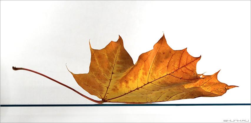 Последний лист осени - лист стекло свет белый фон фото фотосайт