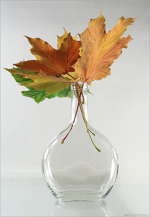 Все цвета в бутылке - натюрморт бутылка листья осень фото фотосайт