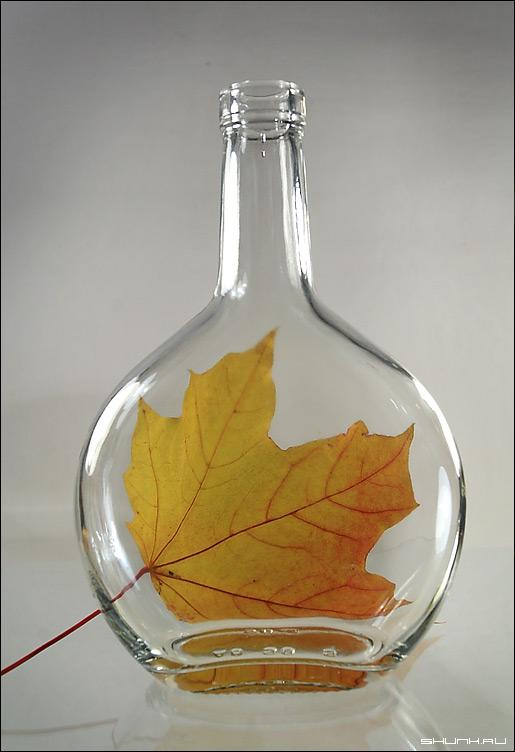 Желтая осень - бутылка натюрморт лист желтый фото фотосайт