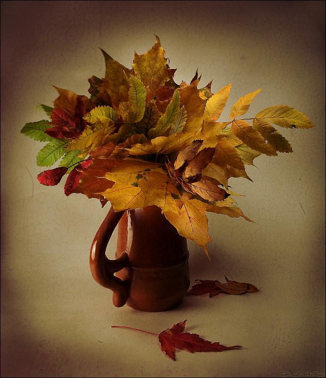 Что ж ты, осень, натворила... - митяев осень листья натюрморт фото фотосайт