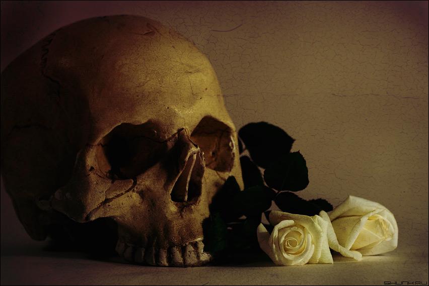 Я часто вижу страх в смотрящих на меня глазах - натюрморт череп розы фото фотосайт