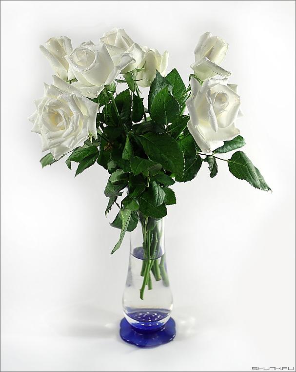 Обычный букет - розы ваза букет свет наюрморт фото фотосайт