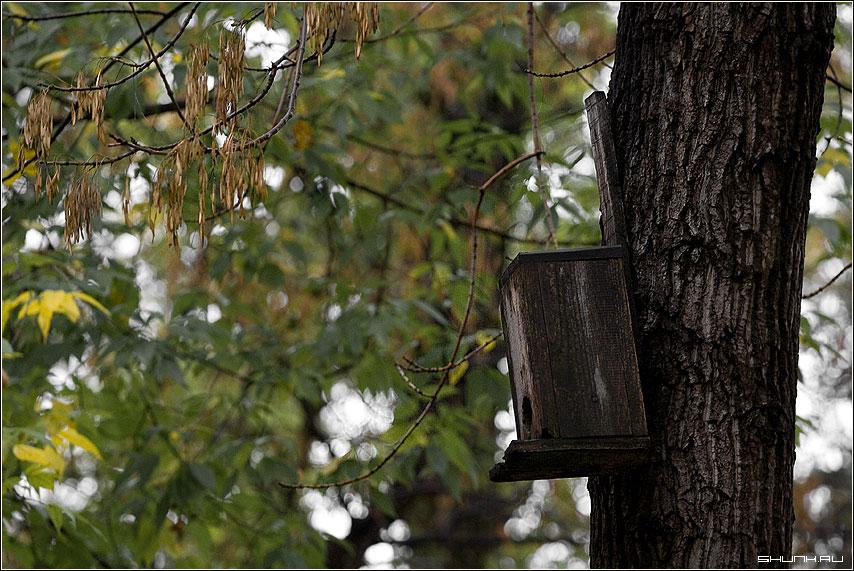 Про неправильных птиц - скворешник дерево верхногами фото фотосайт