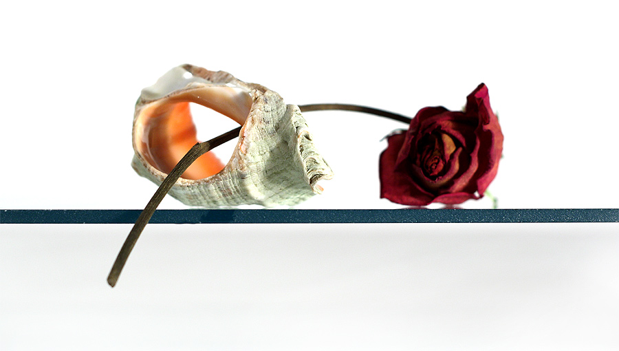 На стекле - натюр роза ракушка раковина фото фотосайт