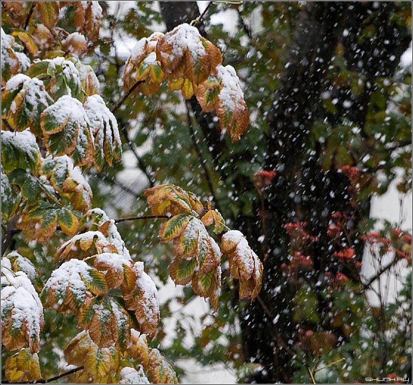 Первый снег 13.10.07 - снег листва осень первый 2007 октябрь фото фотосайт
