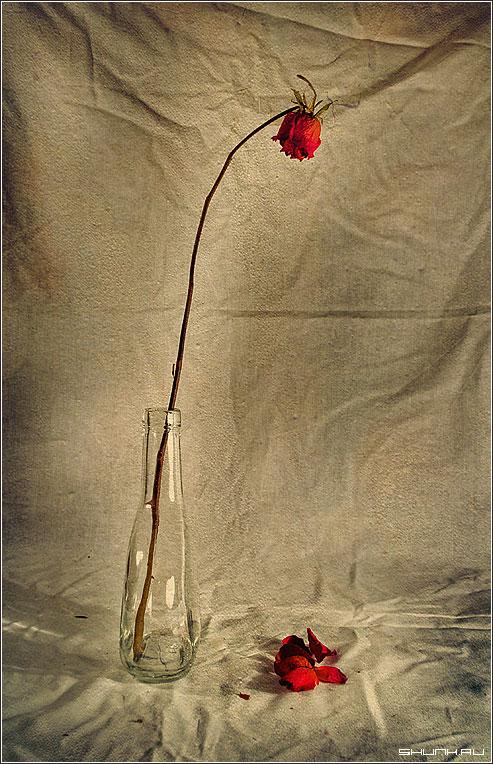 Про опавшие лепестки - натюрмрт бутылка роза лепестки фотошоп фото фотосайт