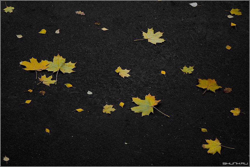 Под ногами - листья на асфальте асфальт черный фото фотосайт
