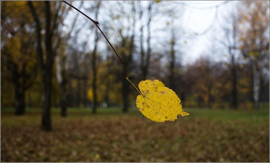 Последний... - лист осень листва фото фотосайт