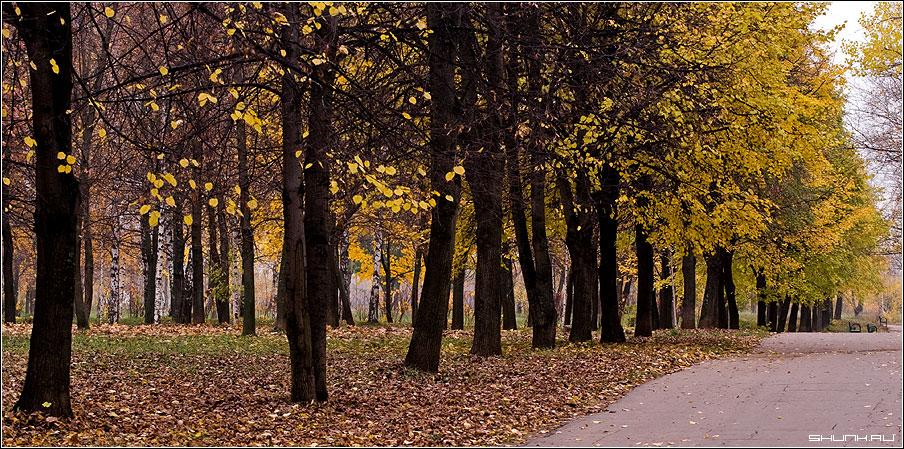 Аллея - осень листья желтые парк фото фотосайт